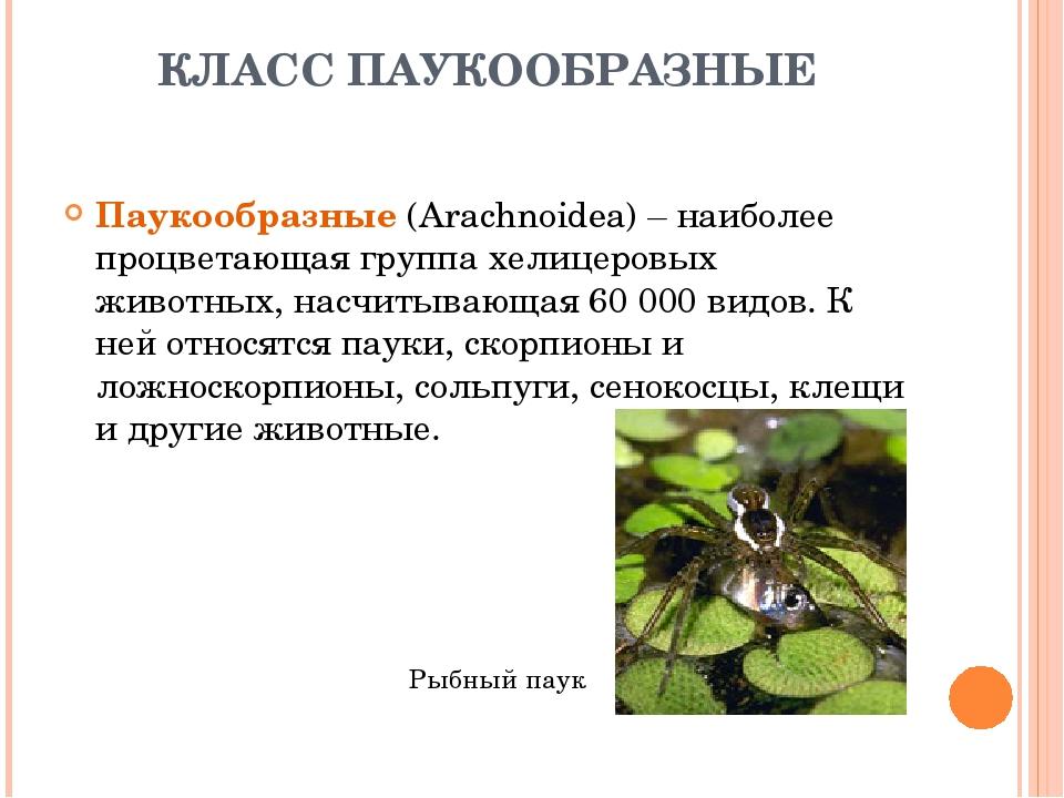 КЛАСС ПАУКООБРАЗНЫЕ Паукообразные (Arachnoidea) – наиболее процветающая групп...