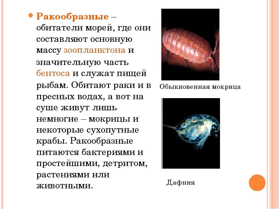Ракообразные – обитатели морей, где они составляют основную массу зоопланктон...