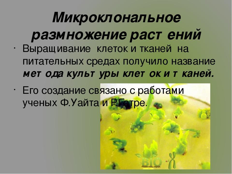 Микроклональное размножение картофеля in vitro