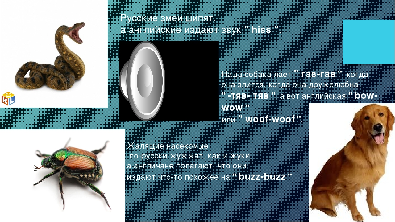 """Русские змеи шипят, а английские издают звук """" hiss """". Жалящие насекомые по-р..."""