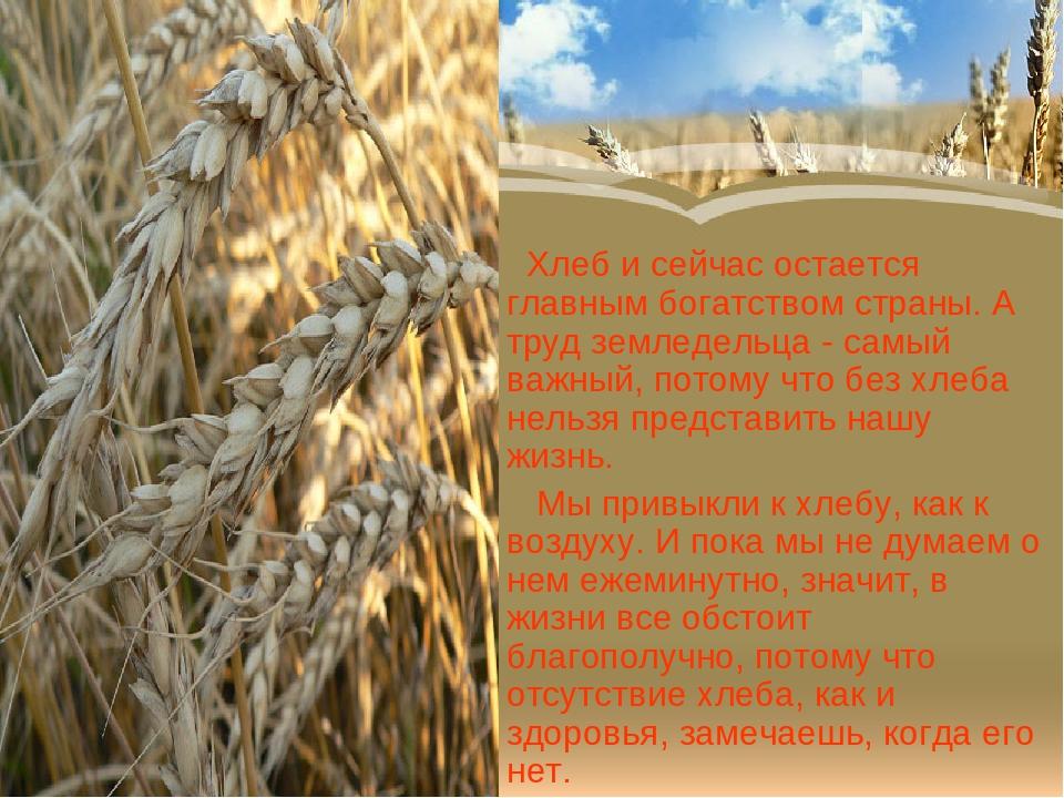 Картинки о хлебе и хлеборобах, поздравление наступающим февраля