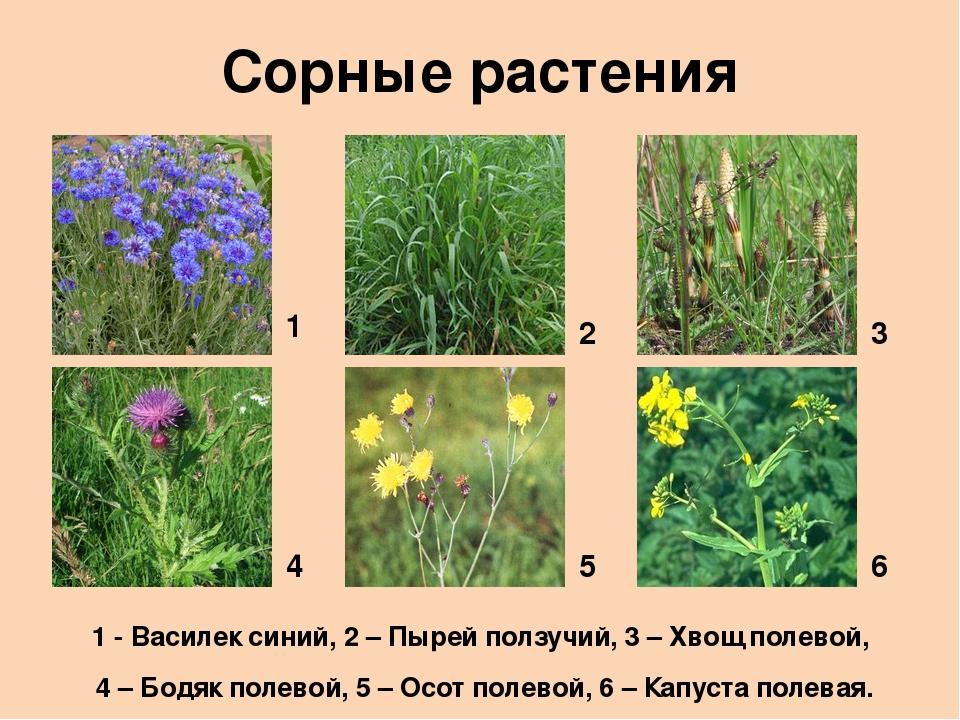 скажет, картинки сорных растений с названиями уже