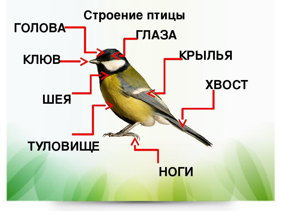 Картинки о строении птицы