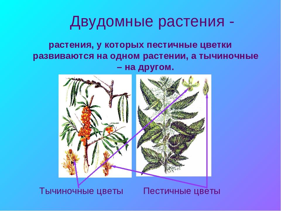 """Урок """"Цветок - как орган генеративного размножения"""""""