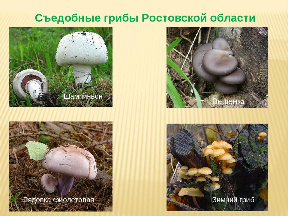внутрь перепончатые грибы с описанием и фото россияне