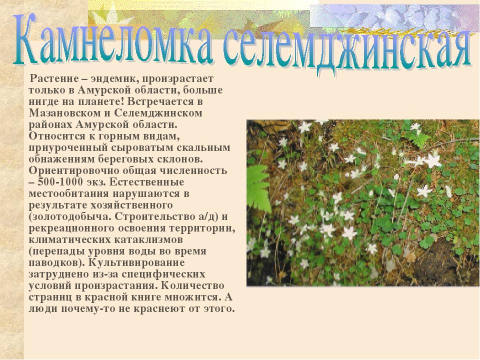 гладкий эндемики россии животные и растения сможете