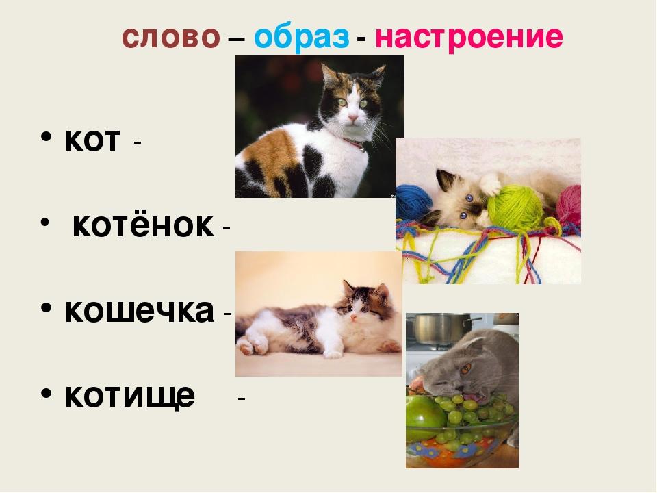 слово – образ - настроение кот - котёнок - кошечка -  котище-