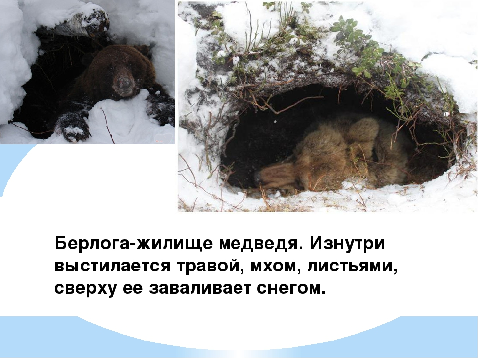 картинка где живет медведь вязаная юбка