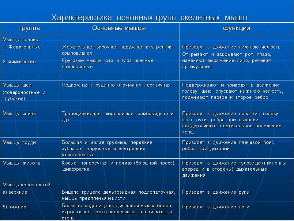 Характеристика основных групп скелетных мышц группаОсновные мышцыфункции Мы...