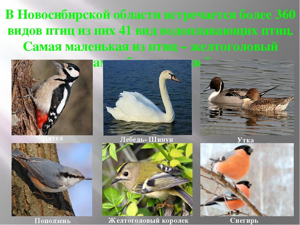 Животные новосибирской области в картинках