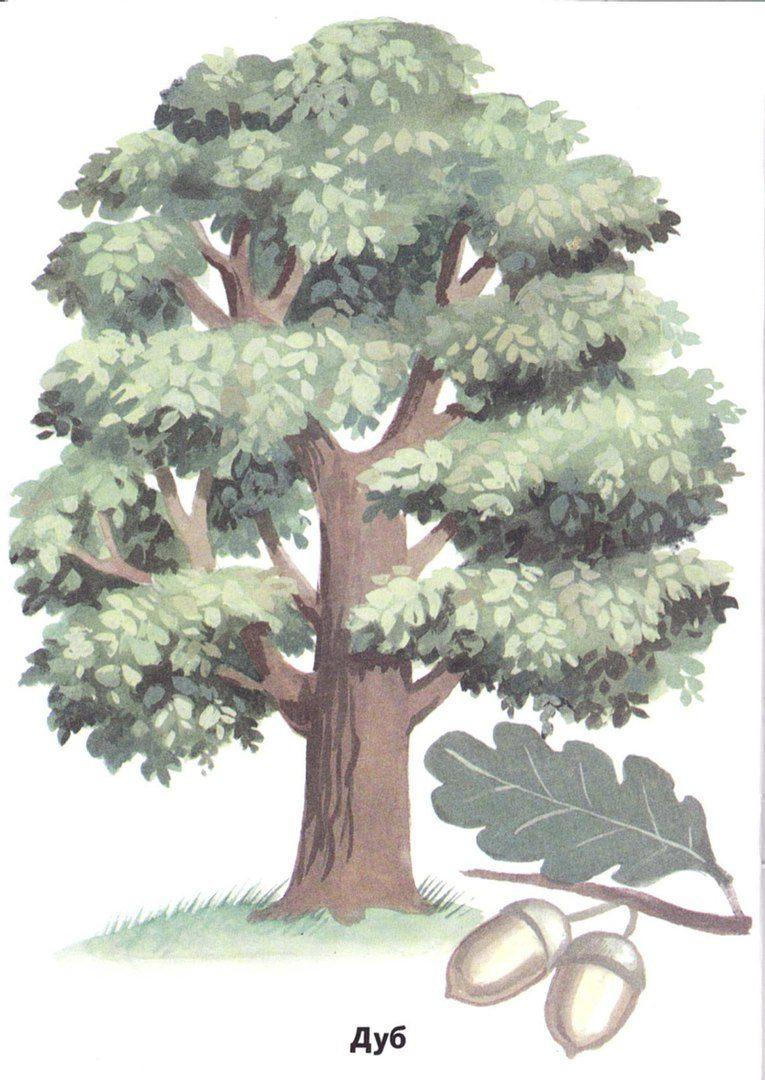 странствующий деревья картинки для доу вашему
