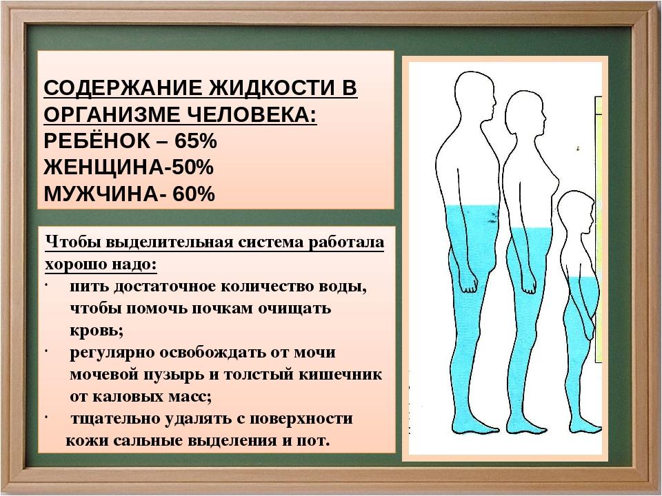 рецепты советы, сколько лишней жидкости может быть в организме Медосмотры