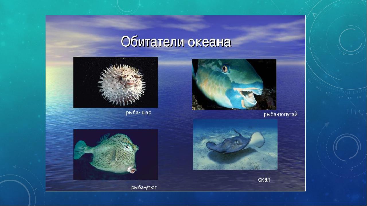 фото животного мира атлантического океана по #11