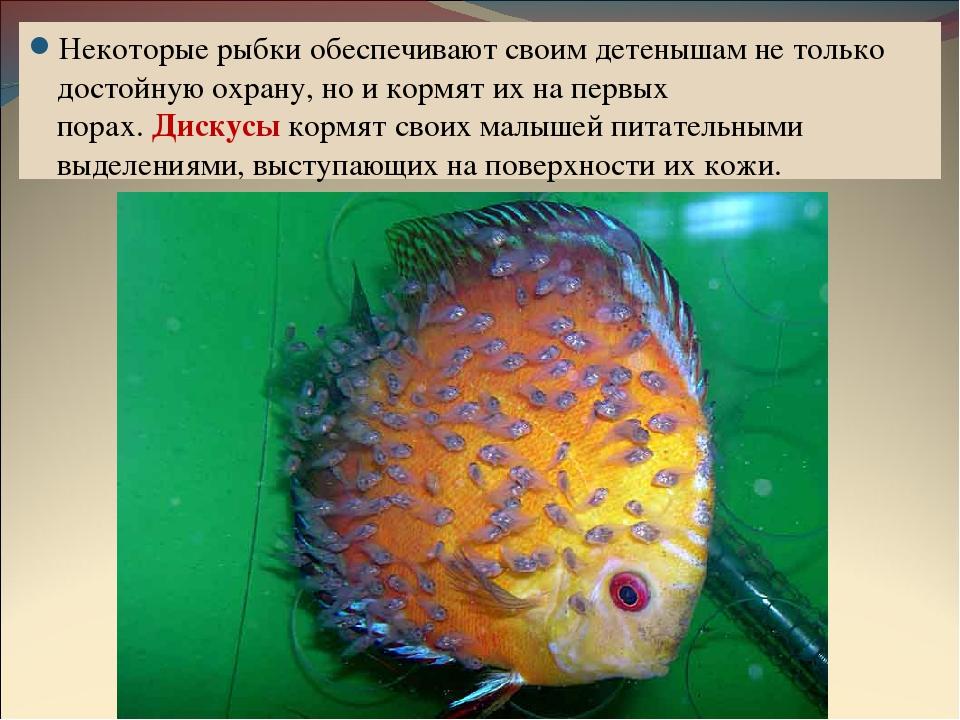 размножение и развитие потомства у рыб фото нравится учиться