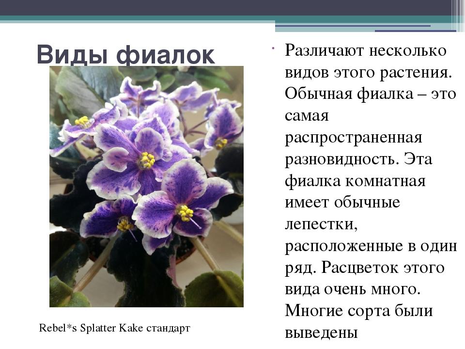 Реферат комнатные растения фиалка 4215