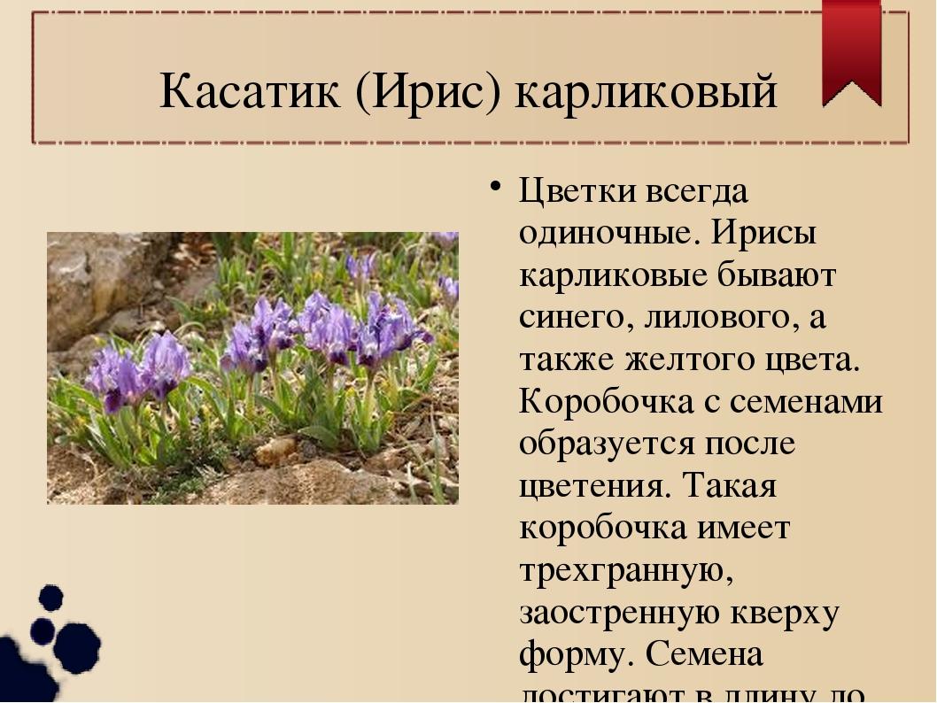 Касатик (Ирис) карликовый Цветки всегда одиночные. Ирисы карликовые бывают си...