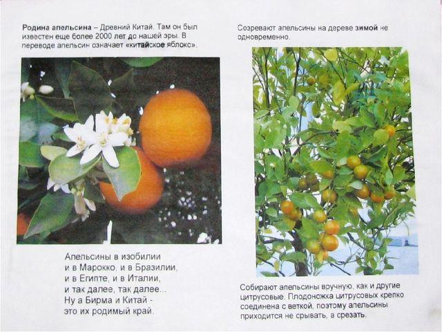Апельсин: описание и сорта, состав и калорийность, польза и ...   480x640