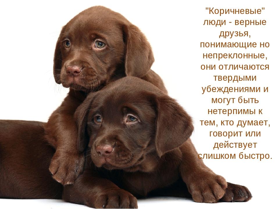 """""""Коричневые"""" люди - верные друзья, понимающие но непреклонные, они отличаются..."""