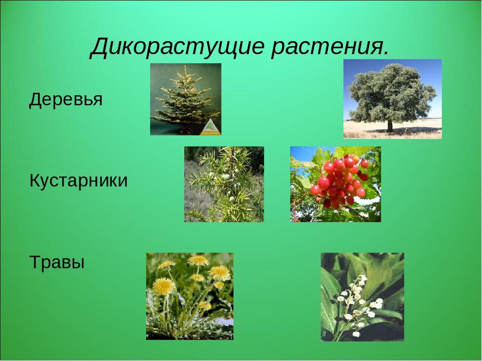 для тех, дикие растения фото и названия украшений
