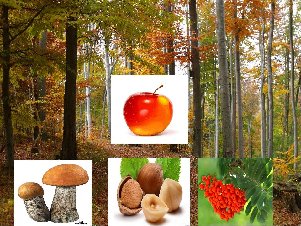 картинки по теме в доу что нам осень подарила