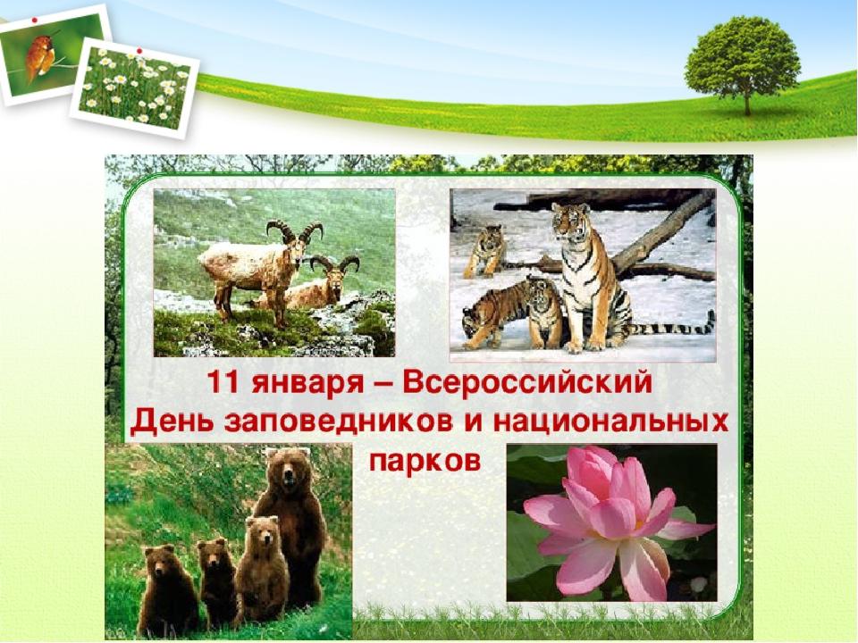 День заповедников и национальных парков 113