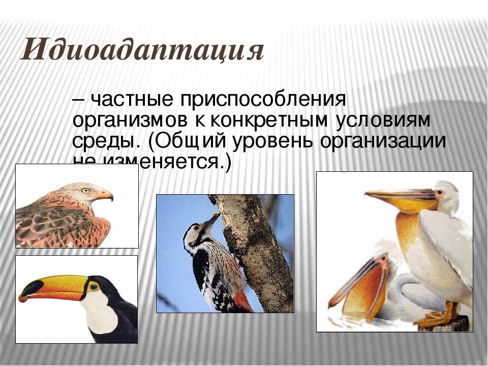 Идиоадаптация – частные приспособления организмов к конкретным условиям среды...