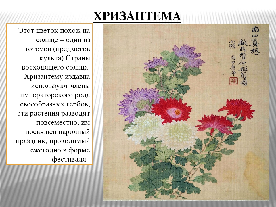 Этот цветок похож на солнце – один из тотемов (предметов культа) Страны восхо...