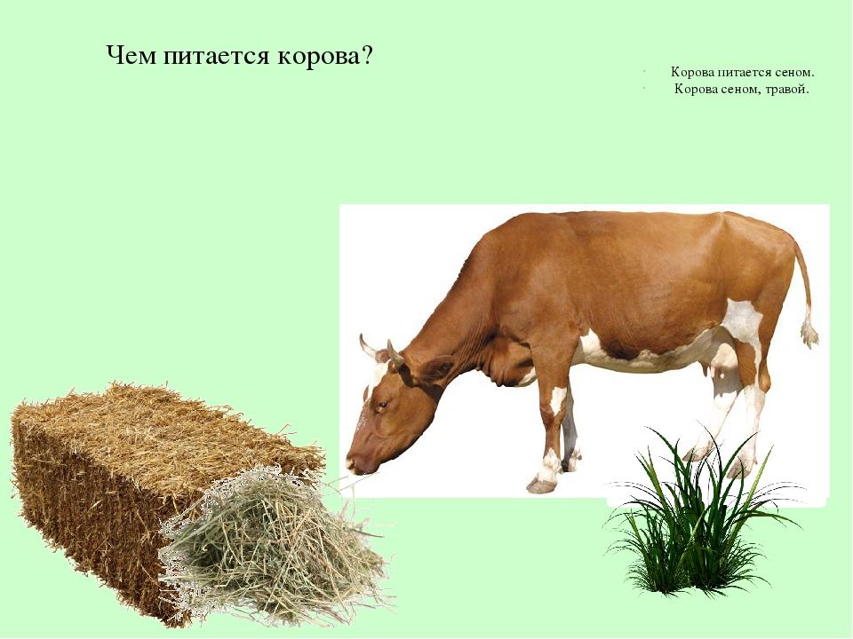 Картинка чем питается корова