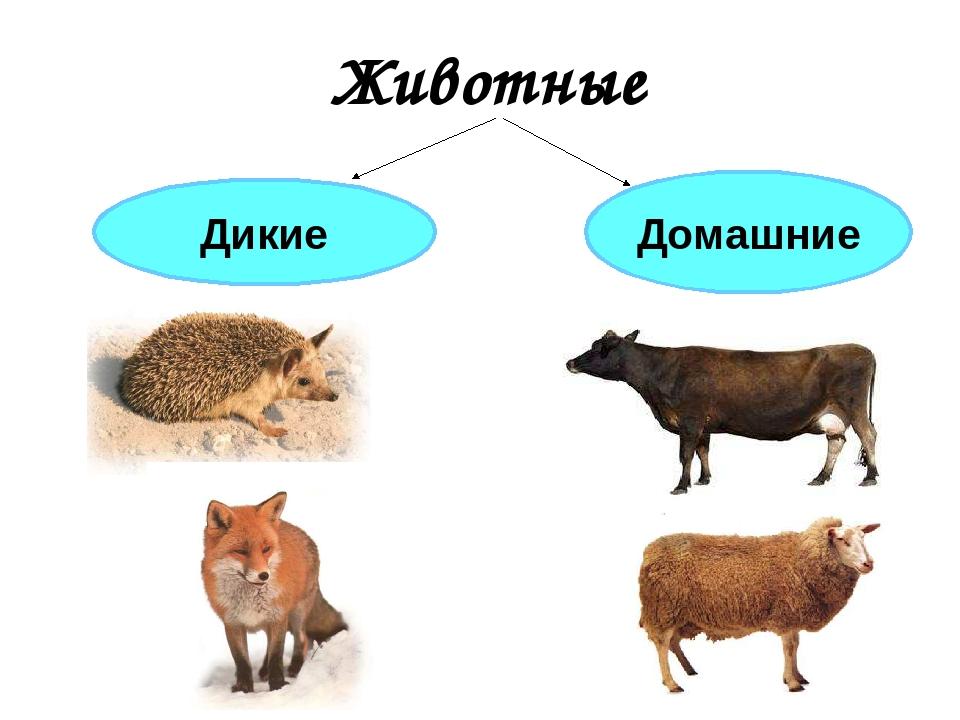 объяснялось картинки диких и домашних животных с описанием кино снималась основном