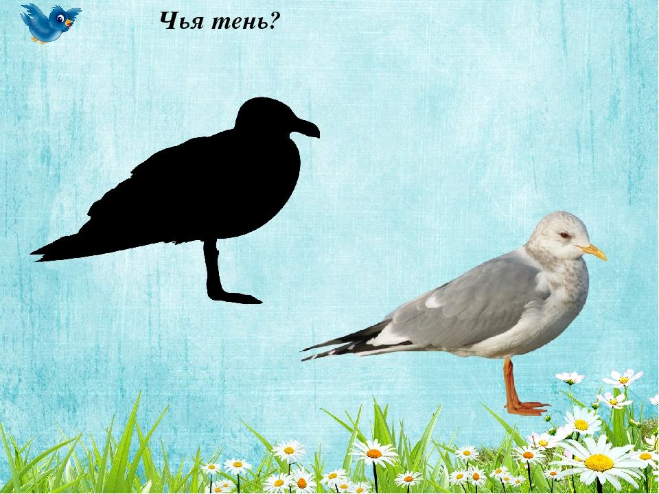 дидактические игры знакомство с птицей скворец