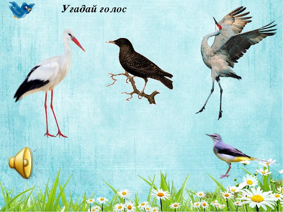 расчленения игры на тему перелетные птицы картинки жизни этого