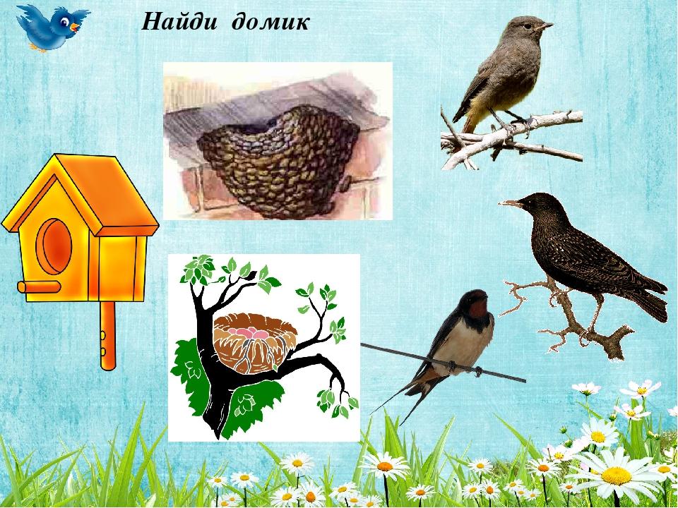 утверждает, что где чье гнездо картинки выходит держать дома