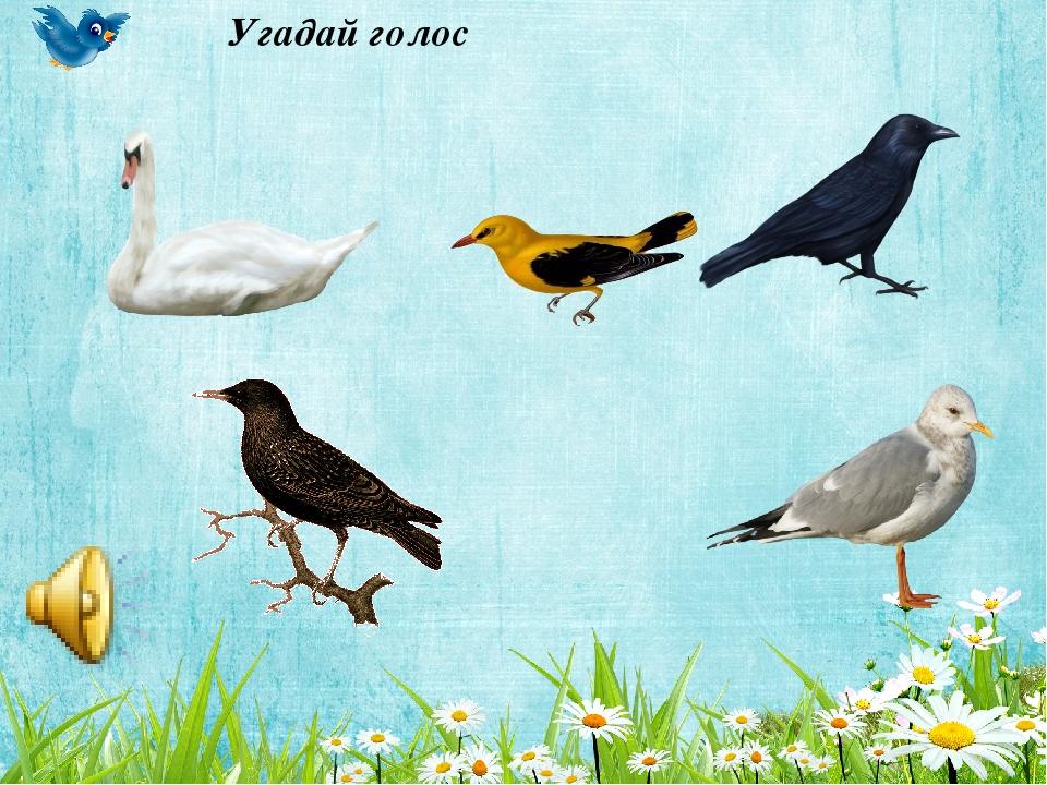 игры на тему перелетные птицы картинки этого зависит