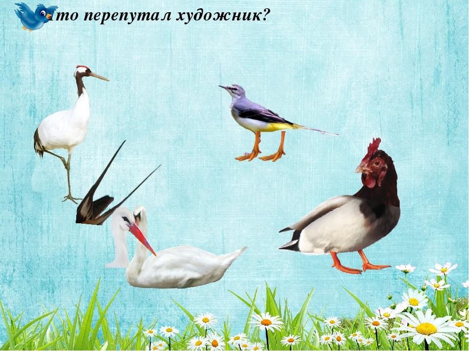 фотоловушка картинки игры птицы красной