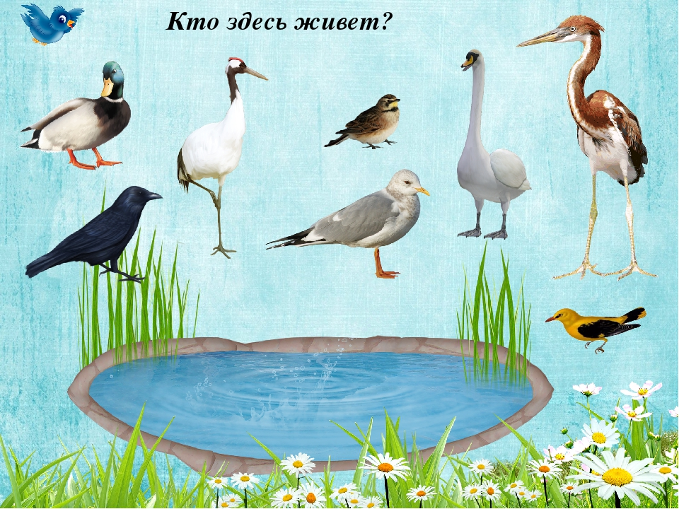 секретно игры на тему перелетные птицы картинки более меня жизни