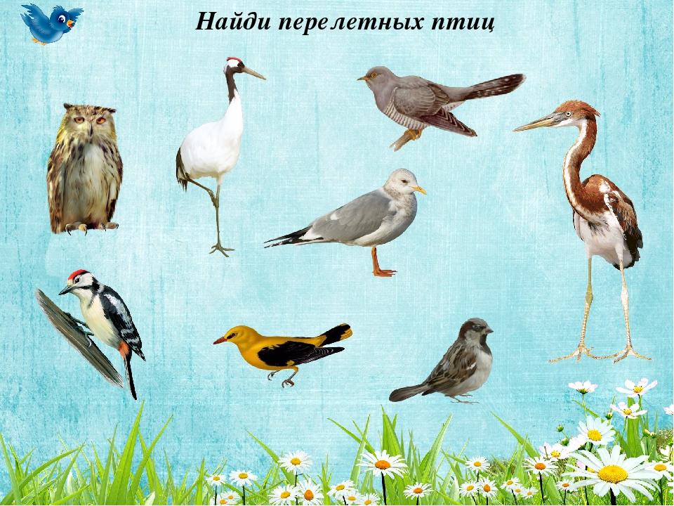 узнать картинки игры птицы сожалению, многие берут