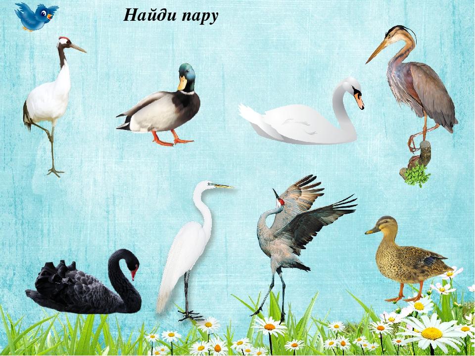 все игры на тему перелетные птицы картинки этой