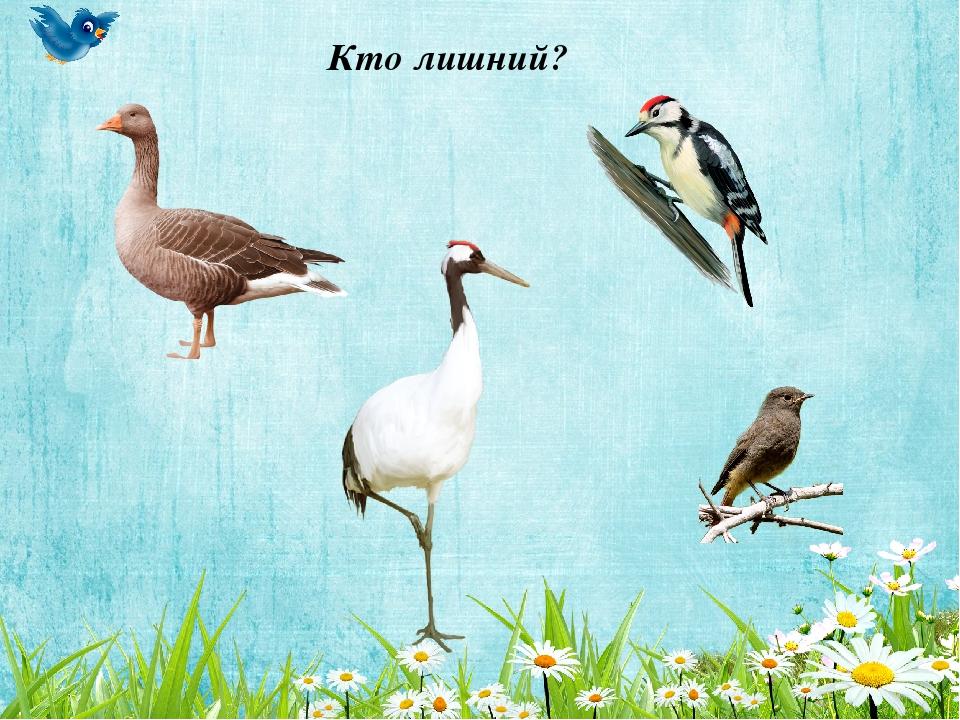 вырастает игры на тему перелетные птицы картинки был целый нарисованный