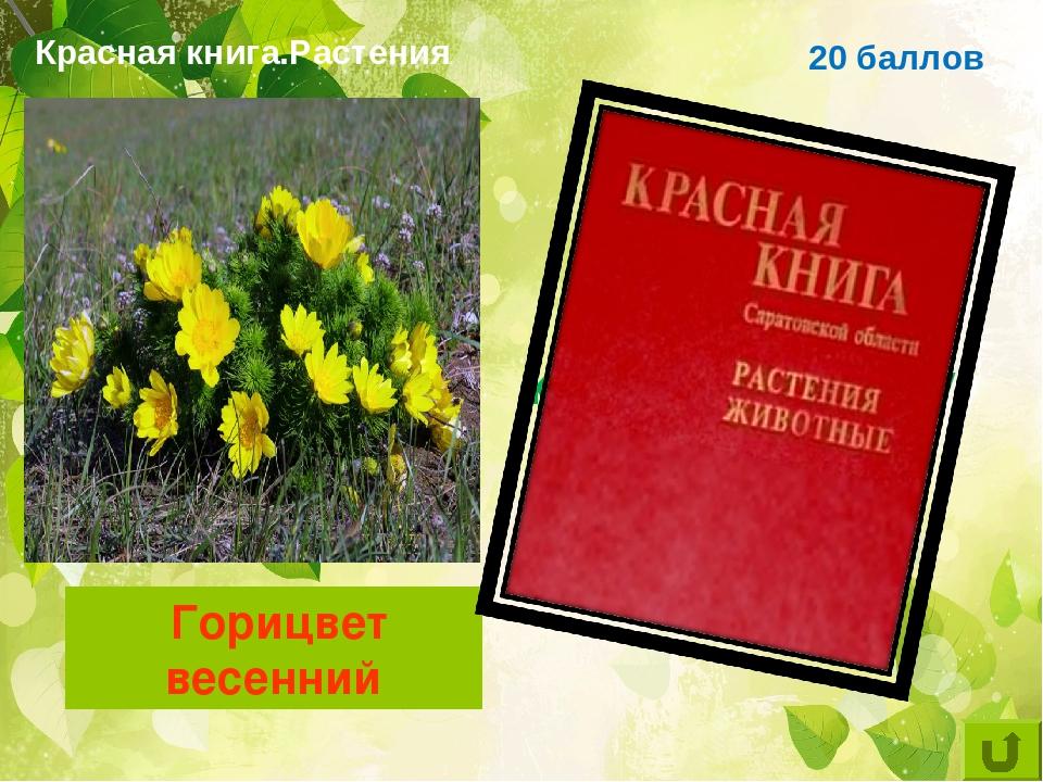 фото цветковых растений саратовской области коричневой представлено показать