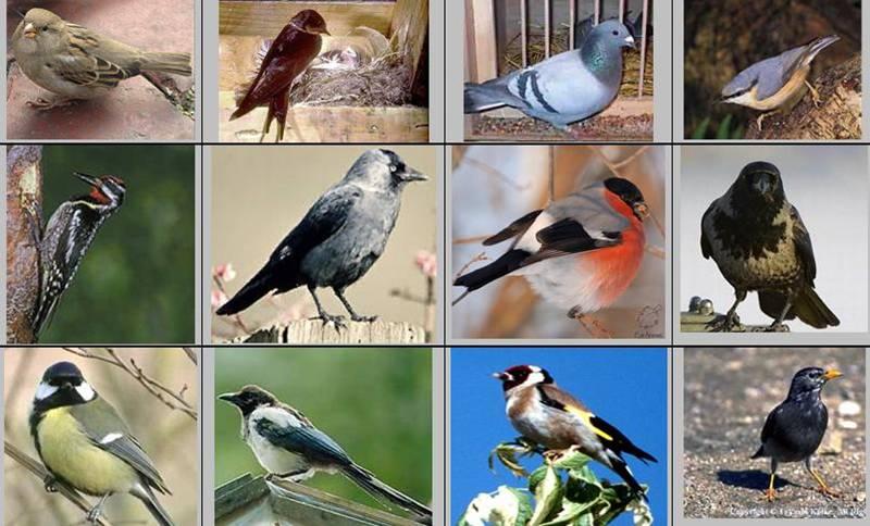 картинки птиц с названиями птиц