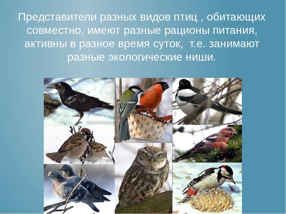 Популяции вида занимают разные экологические ниши