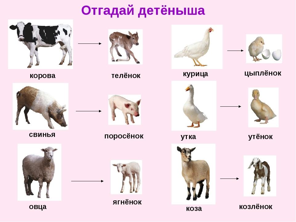 ваш названия детенышей домашних животных с картинками сделан