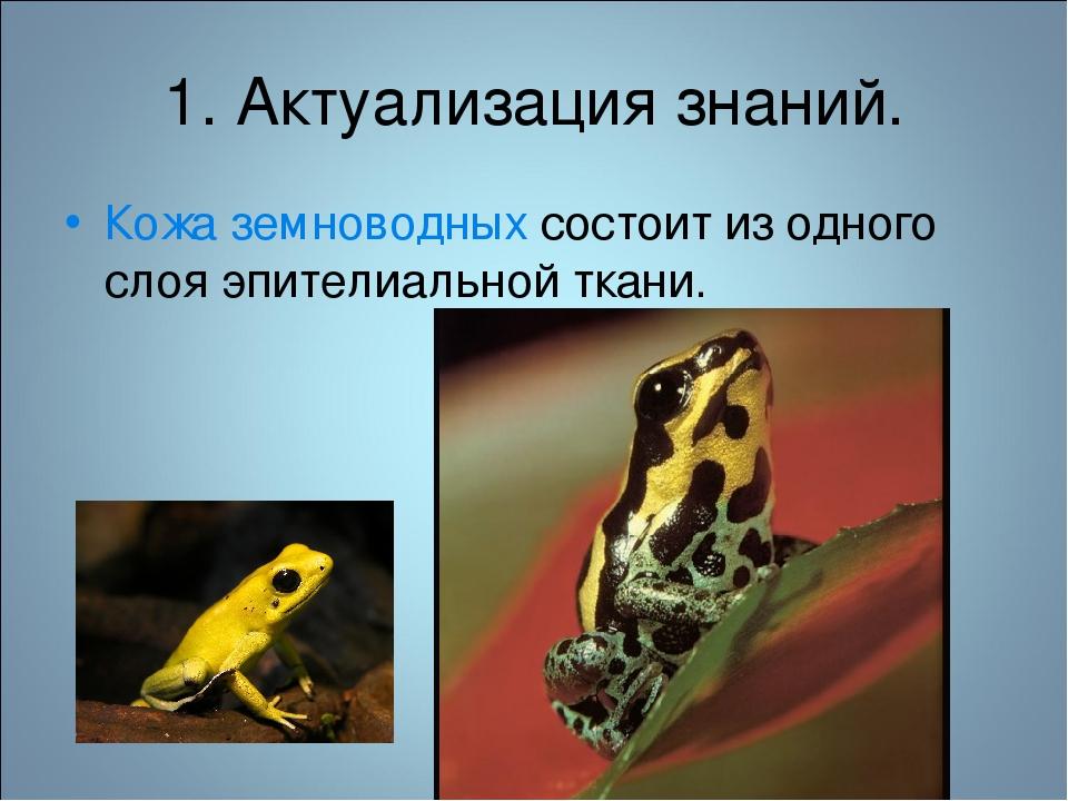 1. Актуализация знаний. Кожа земноводных состоит из одного слоя эпителиальной...
