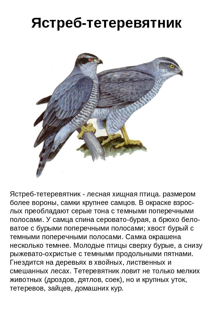 птица средней полосы крупного размера 661299705