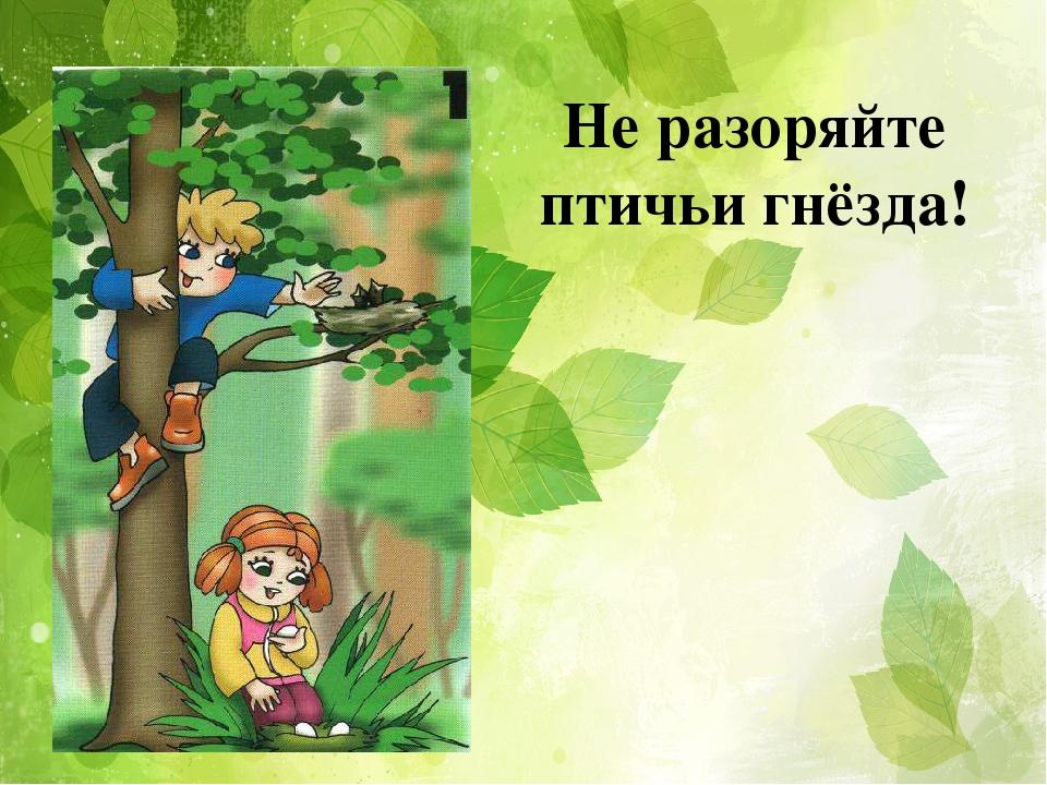 Картинка не разоряйте гнезда шмелей