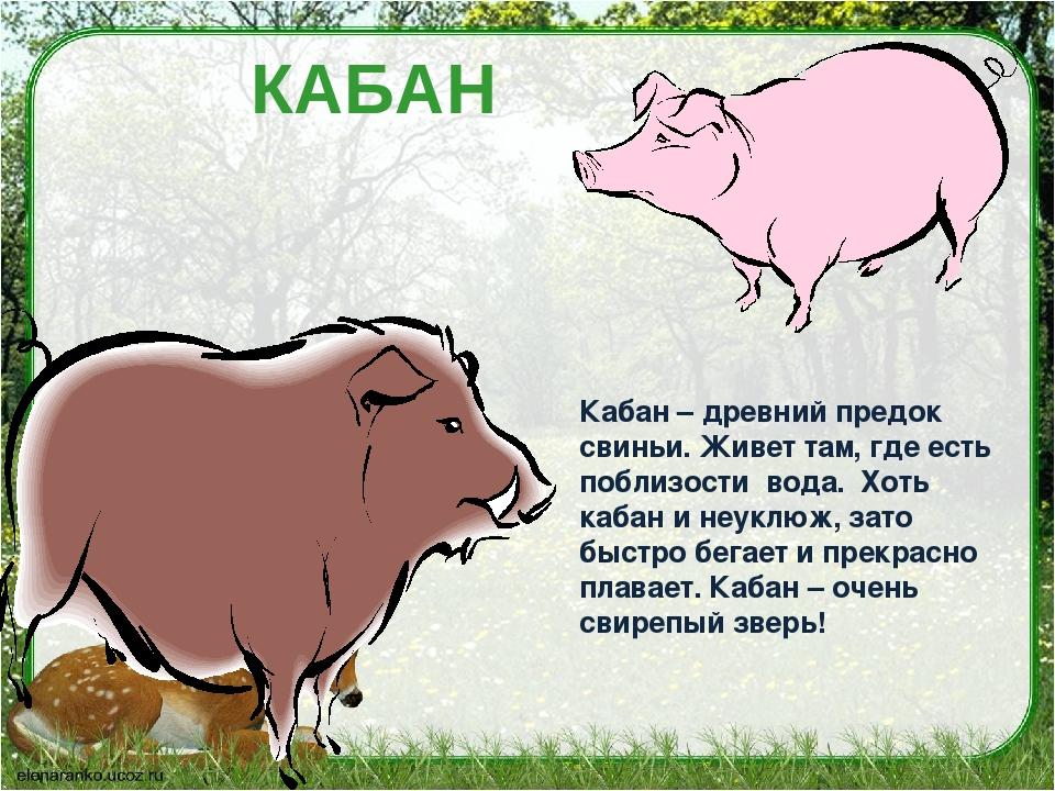 стихи рожденному в год свиньи это сейчас буду