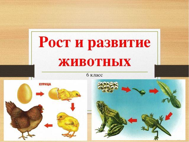 Рост и развитие животных доклад 946