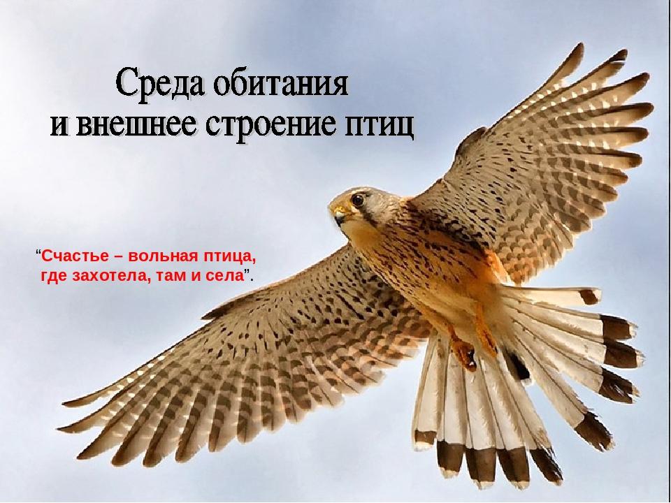 """""""Счастье – вольная птица, где захотела, там и села""""."""