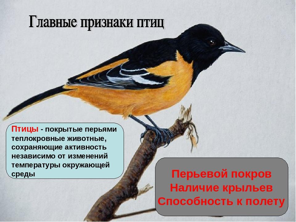 Перьевой покров Наличие крыльев Способность к полету Птицы - покрытые перьями...