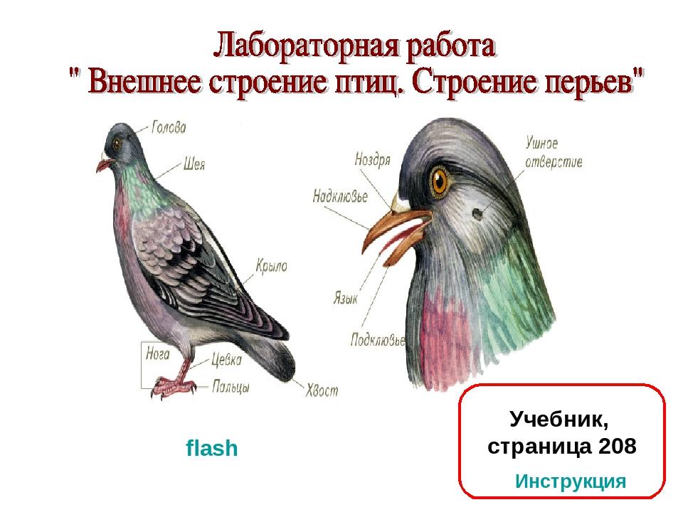 Учебник, страница 208 flash Инструкция